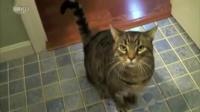 爆笑瞬间汇编《你家的猫猫能训练成这样吗》