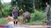 2018-01-05 窦文涛共舞大象有嘻哈 雄象失恋上公路踩坏30多辆车