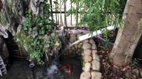 我家多彩缤纷的锦鲤在这样干净见底的鱼塘下自由成长