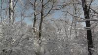 沈北新区《雪》