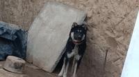 北方土狗☞浪淘沙