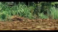 JWE - Korean Trailer.mp4