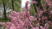 沈北新区喜洋洋广场舞《沈北新区风光-春天来了》(在希望的田野上卡拉ok)