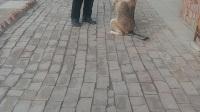 训练一下狗狗喜欢的快手搜索业余训犬第一人关注一下