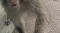 三坡湖野生猕猴来讨食,人与动物如此亲近。