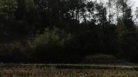 山上池塘抓鱼-03,20200223-2y4m2d