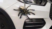快看!蜘蛛🕷️遇到车成精了!