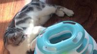 自娱自乐奶油猫猫