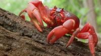 为什么要给螃蟹修天桥,结果颠覆你的认知!