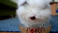 涂口红的小白兔