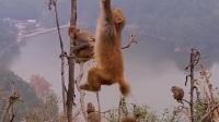快看,树上接满了猴子