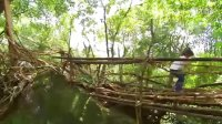 """【藤缠楼】印度的桥梁竟然是""""种""""出来的 开挂的民族伤不起啊"""