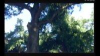 名园易建 古树难求