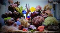25加仑迷你海水缸!精致可爱!
