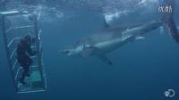 18英尺长的大白鲨