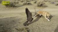 老鹰战斗世界各种动物(狮子,猫,狗,鸭,兔,蛇,狼,山羊等...)
