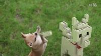 给动物们加上五毛钱特效