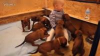 """趁宝宝趴着,三只小狗崽""""占领""""了小主人身体[JUK]"""
