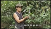 桑树的作用,王涛的桑树园(下集)