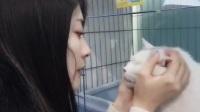 流浪猫得到救助-回访【转】