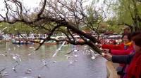 昆明翠湖公园(微型纪录片)