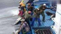 看看海上渔民是如何钓鱼的,每条都是几百斤大