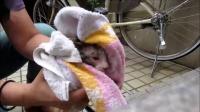 漠羽系列特别专辑 8 救护水中的流浪小猫咪