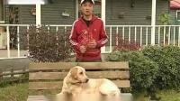训犬教程:训练狗狗不在家中大小便