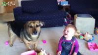 每日一狗:狗狗逗得孩子大笑,狗狗和baby是天生的cp吗?