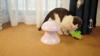 USB Charged Laser&Feather Pointer Cat Toy