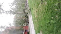 天津商业大学大树被龙卷风刮倒
