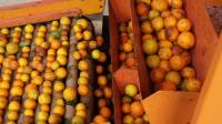 Cō-Impact Sourcing丨巴西-野橘