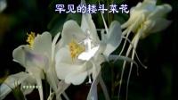 2018.9.10送给教师节的花