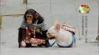 神奇伙伴在哪里之狗狗猩猩结伴解锁洗衣技能 最怂喵星人被整惨
