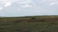 201809肯尼亚马赛马拉国家公园-问路