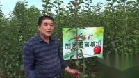 烟台元峰果业宣传片1