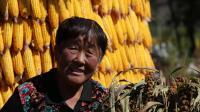 中国农民丰收节醉美马营河