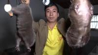 【华农兄弟】隔壁泰山feat.竹鼠