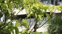七彩澜湾的鸟