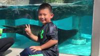 【7岁】6-30哈哈在东京上野动物园看海狮大熊猫IMG_0505