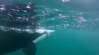 鲸鱼:旋转!360º、720º……跳跃!送你上天。