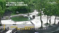 小象落水,大象慌了…