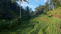 把巴厘岛的美景嵌进旅行日记里做成视频转场,这个操作66666,太有创意了!!📷来自狗友