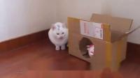 猫咪不知道自己被剃光,直到在镜子里看到自己样子后蒙了!
