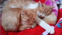 买了个玩具小滑板车,猫猫们挺喜欢的,睡觉都得捂着搞笑视频