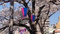 日本樱花和街道