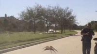 巨型蜘蛛入侵?别紧张,只是小蜘蛛爬上挡风玻璃搞笑视频