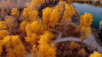 塔克拉玛干大沙漠水上的胡杨林(拍摄于2018.10.22)