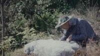 千红御蜜—源于深山老林的野桂花蜜