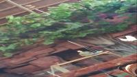 动物园鹦鹉表演升旗和投篮,非常有趣搞笑,广西卢超原创实拍旅游视频